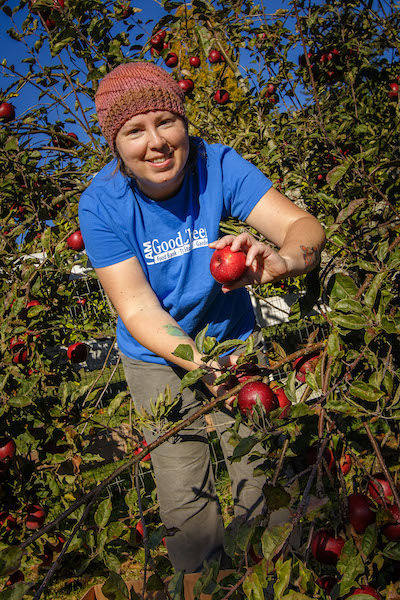 Woman in blue shirt picking apples