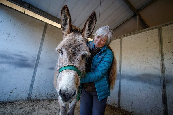 Silver-haired woman with arms around a furry burro
