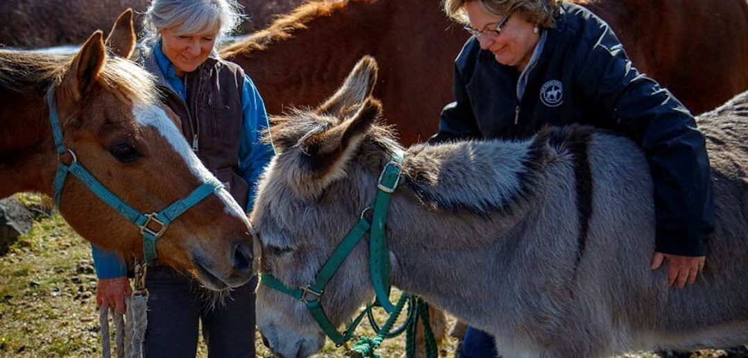 Two women with horses and donkey touching noses