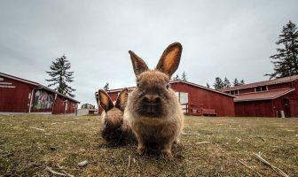 A pair of gold fairground bunnies.