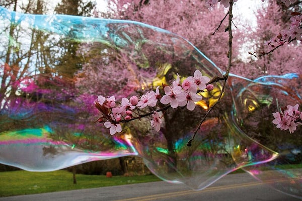 pink flowers magnified in a rainbow bubble
